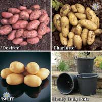 Complete Starter Patio Potato Growing Kit