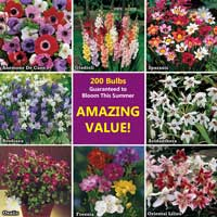 Bumper 200 Summer Flowering Bulb Collection