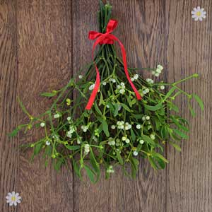 Half price Mistletoe - bunch of 10 sprigs