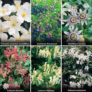50% off 6 Climbing Plants collection
