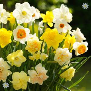 �10 OFF 25kg Daffodil Nets!