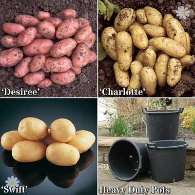 Image of Complete Patio Potato Growing Kit Including Seed Potatoes, P
