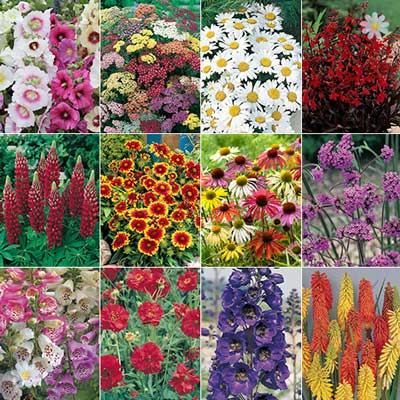 Image of Complete Hardy Garden Perennial Plant collection - 24 plug plants
