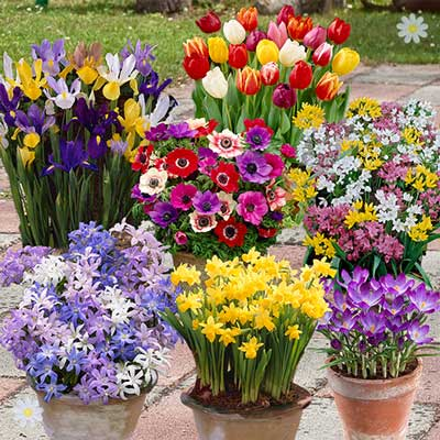 Image of 300 Spring Flowering Bulb Offer in 8 varieties