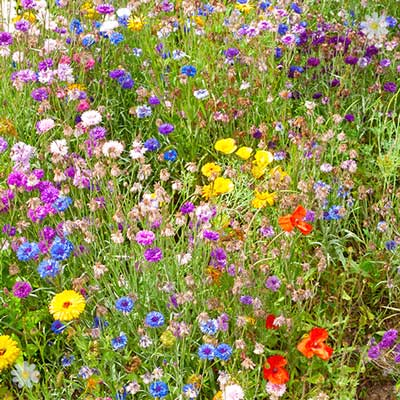 Butterfly & Bee Booster Seed Carpet 2M x 48cm YouGarden
