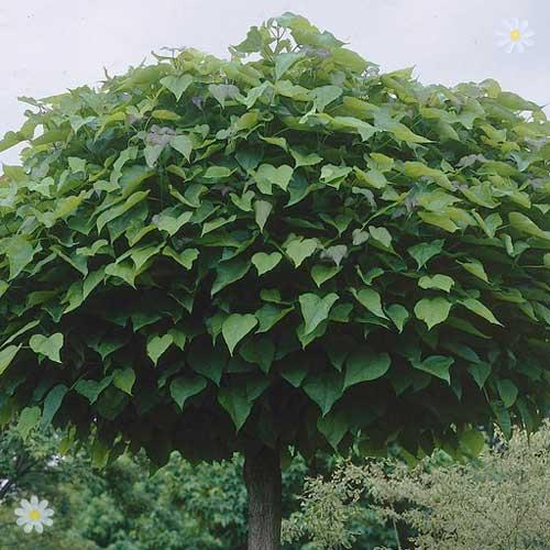 Where To Plant Raspberries Bushes