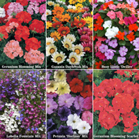 Buy all 6 packs Bumper Maxiplug Deal - 144 plants